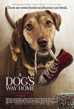 A-Dogs-Way-Home-50