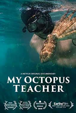 My-Octopus-Teacher-50